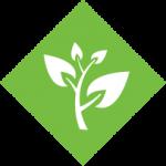 Eco friendly adhesive